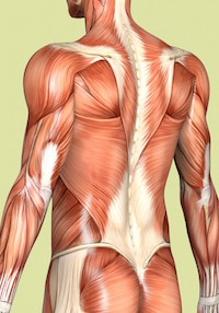 Structural Bodywork and Nerve Manipulation Therapy